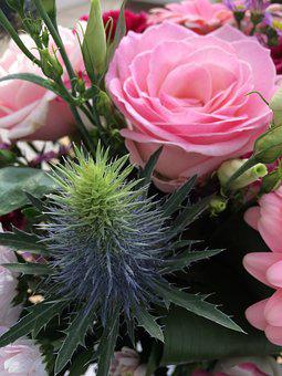Thistle Among Roses, Pink Roses, Thistle