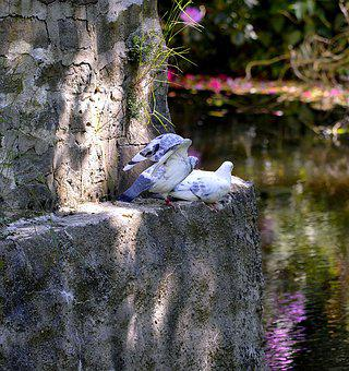 Pigeons, Wall Of Paragraph, Sit, Feather, Bird, Bill