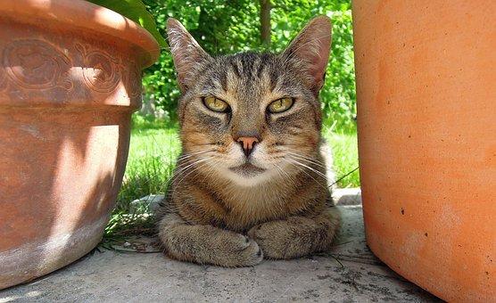 Cat, Kitten, Tabby Kitten, Macskafej, Is Watching, Tile