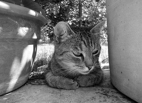 Cat, Kitten, Tabby Kitten, Domestic Cat, Tabby, Gray