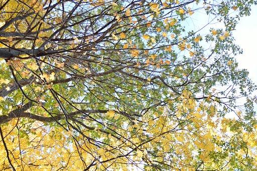 Tree, Trees, Leaves, Fall, Foliage, Yellow, Green