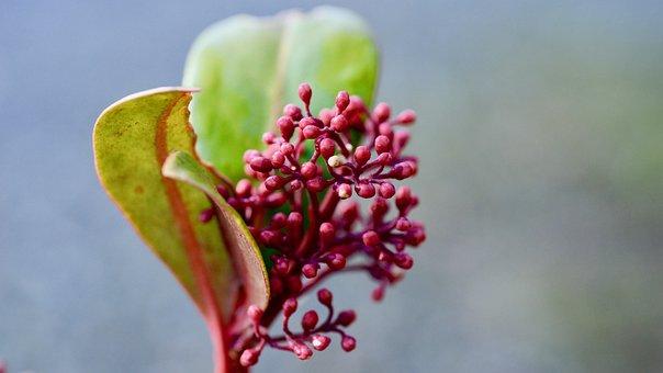 Flowers, Spring, Wallpaper, Light, Leaves, Plant