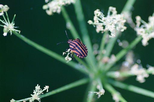 Beetle, Nature, Detail