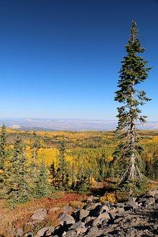 Pine Tree, Autumn, Mountains, Pine, Forest, Tree