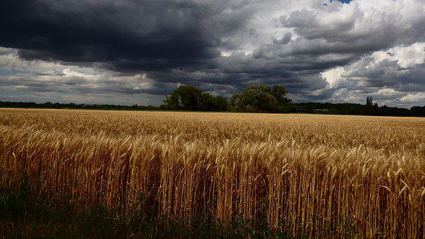 Country, The Grain, Wheat, The Sky, Sky, Before, Burkou
