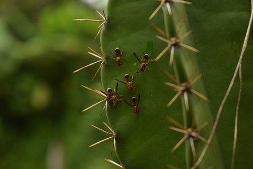 Animals, Ants, Nature