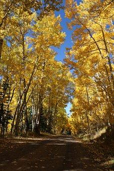 Autumn, Trees, Aspens, Fall, Nature, Season, Forest