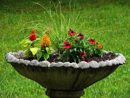 Bird, Bath, Flowers, Unique