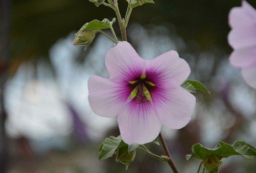 Flower, Pretty, Beautiful, Garden, Nature, Pink