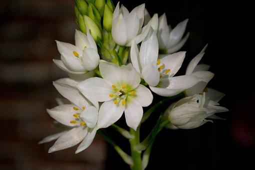 Flowers, White, White Flowers, Flower, White Flower