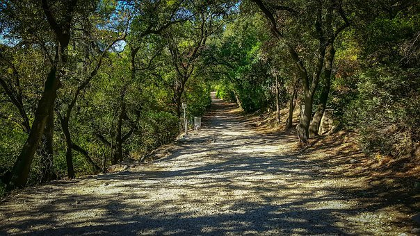 Path, Trail, Shadow, Nature, Forest, Adventure, Unknown