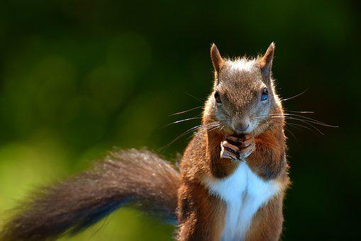 Squirrel, Nager, Garden, Rodent, Nature, Cute