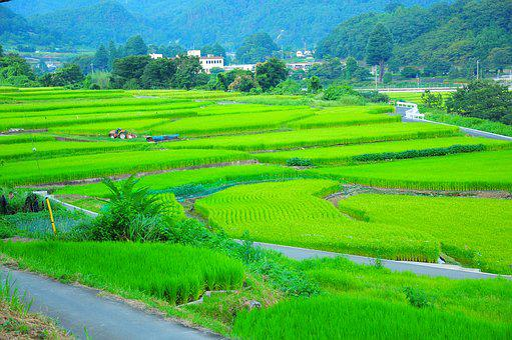 Field, Yamada's Rice Fields, Rice Terraces