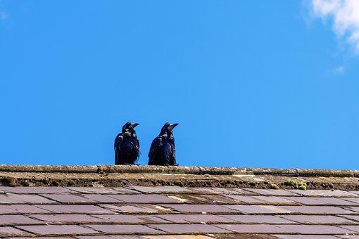 Birds, Two, Pair, Plumage, Animal, Black, Roof, Watch