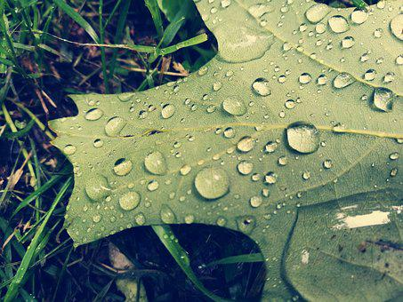 Leaf, Rain Drops, Water, Drops Of Water, After The Rain