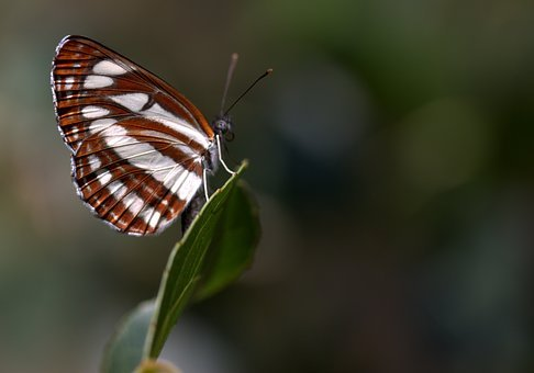 Butterfly, Coloring, Stripes, Insecta, Wings