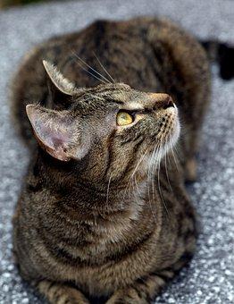 Animals, Domestic Cats, Pet, Mieze
