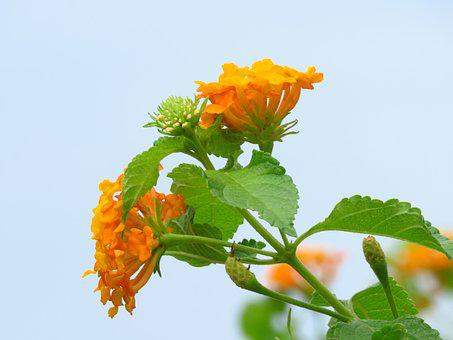 Flower, Yellow, Garden