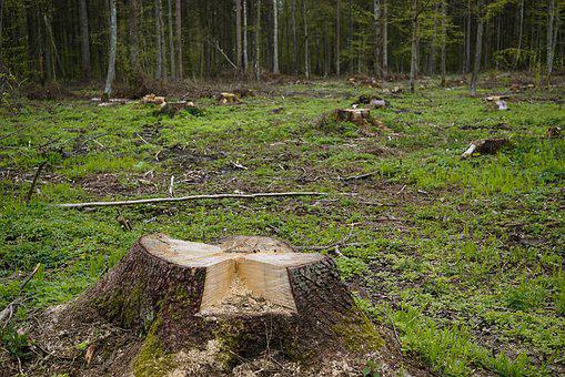 Snagit, Trunk, Cut Down A Tree, Felling Of The Forest