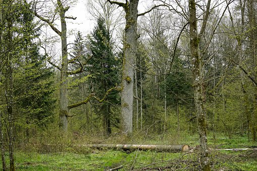 Oaks, Oak, Old Tree, The Nature Reserve, Trunk