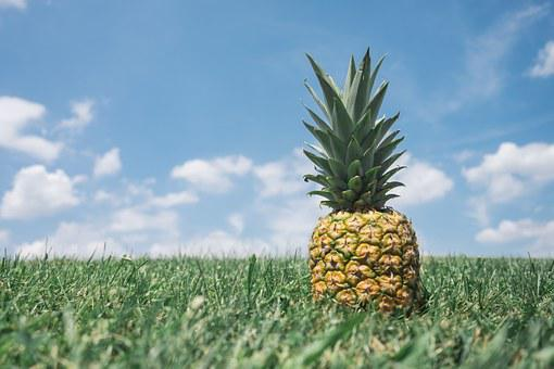Pineapple, Field, Hospitality, Welcome, Leave, Exit