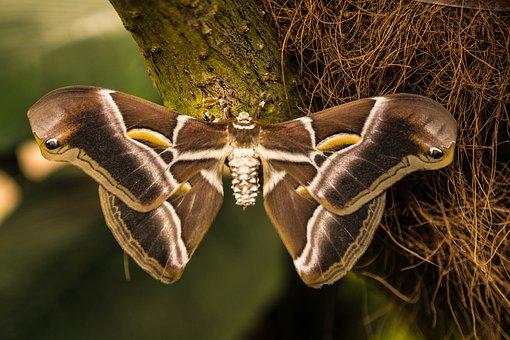 Benalmádena Mariposario, Night Butterfly, Benalmádena