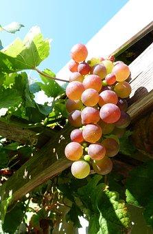 Autumn, October, Weather, Wine, Grapes, Wine Berries