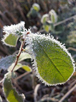 Winter, Frost, Frozen, Wintry, Cold, Hoarfrost, Branch
