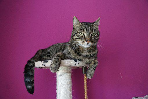 Cat, Tiger, Adidas, Pet, Mieze, Animal, Cat Tree