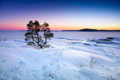 Winter, Sea, Frozen, Snow, Tree, Water, Nature, Sky