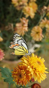 Butterfly, Blooming, Bloom, Flower, Floral, Blossom