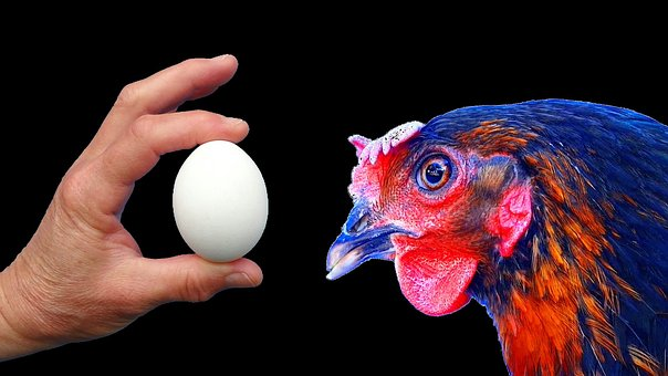Hen, œuf, Black, Chick