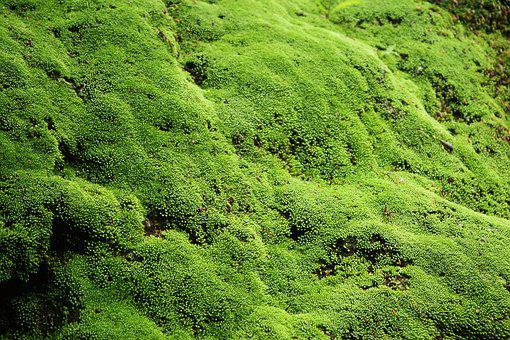 Green, Moss, Beautiful, Wall, Indonesian, Natural