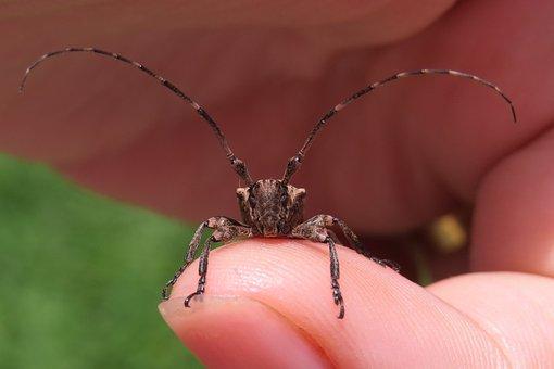 Insect, Beetle, Arthropod, Animal, Invertebrate, Nature