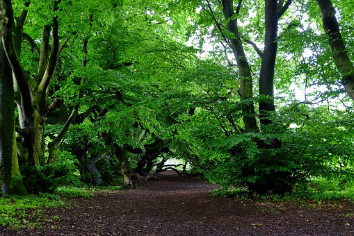 Book, Beech Wood, Avenue, Nature, Trail, Recovery