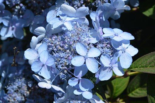 Flowers, Pretty, Beautiful, Garden, Nature, Spring