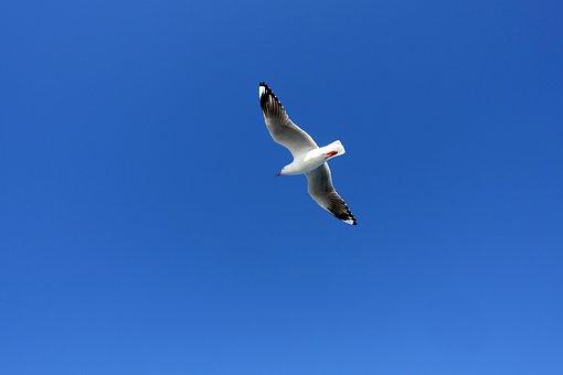 Seagull, Birds, Wing, New, Seabirds, Sea, Sky, Nature