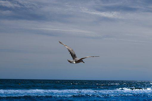 Seagull, Fly, Sea, Wing, Motivation, Silhouette, Bird