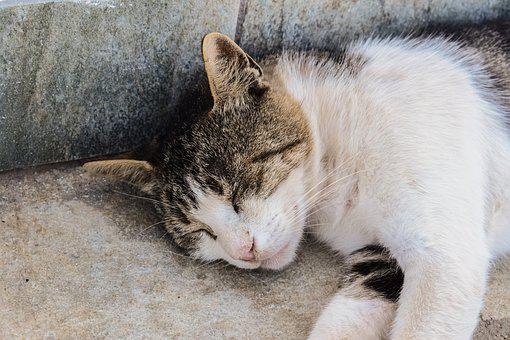 Cat, Stray, Street, Animal, Homeless, Resting, Summer
