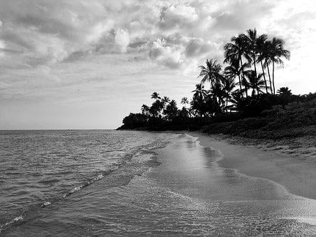 Beach, Palm Trees, Hawaii, Sand, Water, Black And White