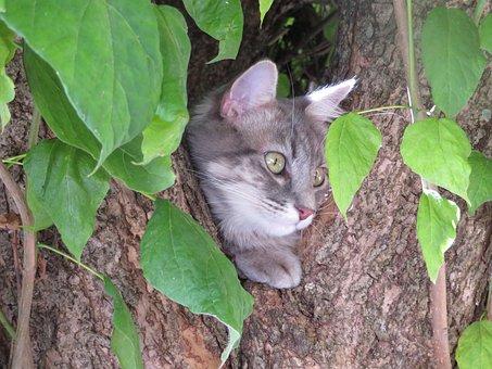 Cat, Head, Grey, Tree, Leaves, Perched, Cute, Eyes