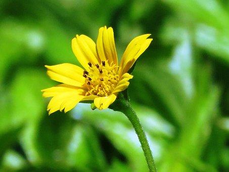 Flower, Yellow, Garden, Leaf, Bloom, Spring, Orange