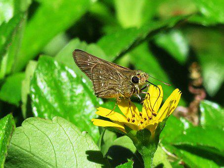 Butterfly, Small, Close Up, Colorful, Insect, Nature