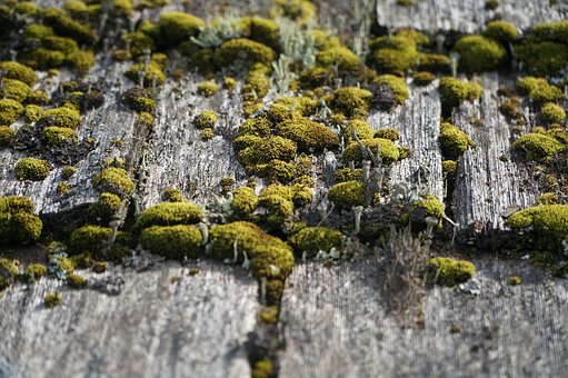 Wood, Weathered, Moss, Gray, Surface, Texture, Plank
