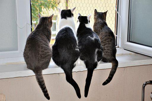Animals, Cat, A Normal Cat, The Silhouette, Friend