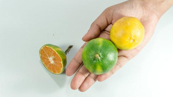 Asian, Green Oranges, Hand, Women, Vitamin C, Orange