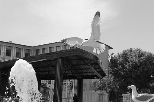 Scully, Birds, Water, Freedom, Bird, Seagull, Animal