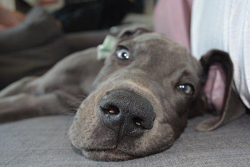 Dog, Puppy, Nose, Dog Nose, Cute, Adorable, Mammal