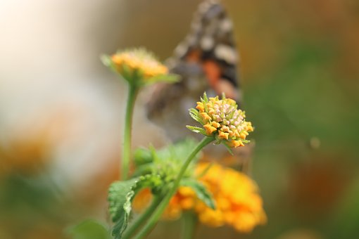 Butterfly, Macro, Close, Green Field, Animal, Spring