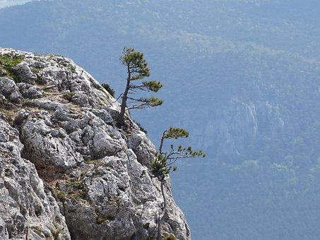 Cliff, Pine, Nature, Landscape, Mountains, Austria